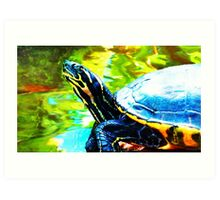 Colorful Turtle by Sharon Cummings Art Print
