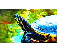 Colorful Turtle by Sharon Cummings Photographic Print