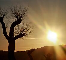 Sunset on a leafless tree by missmoneypenny