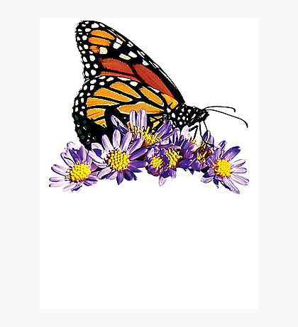 Monarch on Purple Flowers Photographic Print