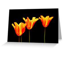 orange tulips on black Greeting Card