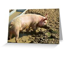 pig,caught, snout, trough Greeting Card