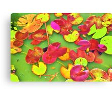 Lily Pad Faces Canvas Print