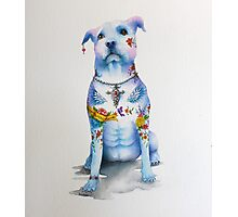 Pit Bull Tattoo Dog Photographic Print