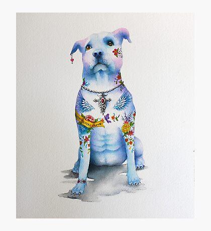 Pit Bull Tattoo Dog Photographic Print