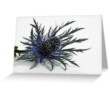Eryngium Greeting Card