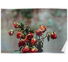 Windowsill Roses Poster