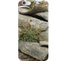Shingles and Plants on a Roof iPhone Case/Skin