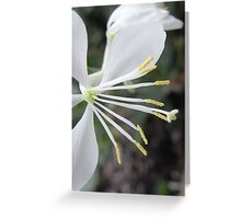 Gaura flower or Butterfly plant Greeting Card