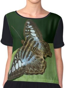 Blue Clipper Butterfly Chiffon Top