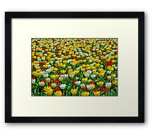 And the winner is ... Yellow! Framed Print