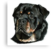 Hamish the Rottweiler Canvas Print
