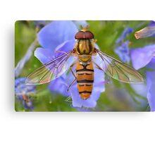 Hoverfly Wings  [ PVL ] Canvas Print