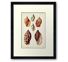 Proceedings of the Zoological Society of London 1848 - 1860 V5 Mollusca 032 Framed Print