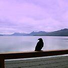 Crooked Foot: Icy Strait Point Alaska by Elizabeth  Lilja