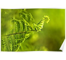 a young green fern growing in forest Poster