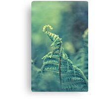 Photo of green fern growing in forest Canvas Print