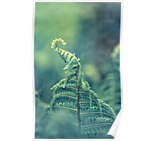 Photo of green fern growing in forest Poster