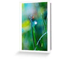 fly in the dewy grass bright sunny morning bokeh background Greeting Card