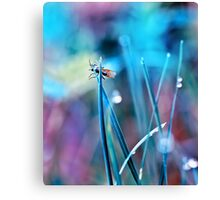 fly in the dewy grass bright sunny morning bokeh background Canvas Print