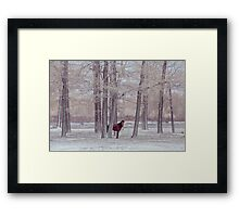 lonely horse in front of snowy winter forest Framed Print