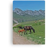 Wild horses: a mare and newborn foal Canvas Print