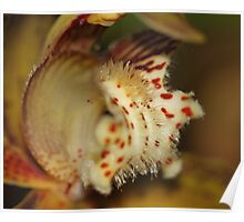 Orchid in Super Macro Poster