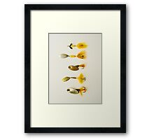 Rooster or Panther - The Dilemma Framed Print