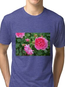Pink rose in the garden. Tri-blend T-Shirt
