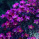 Purple flower  by RosiLorz