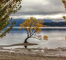 Wanaka Lake Tree 7 by Charles Kosina