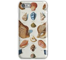 Vintage famous art - Franz Michael Regenfuss - A Selection Of Seashells iPhone Case/Skin