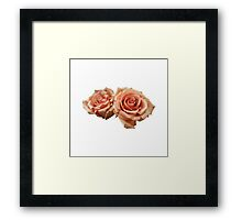 Two Peach Roses Framed Print