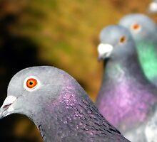 Trial by Pigeon by kibishipaul