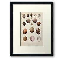 Proceedings of the Zoological Society of London 1848 - 1860 V5 Mollusca 017 Framed Print