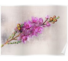 Pink Feather Flower Poster