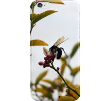Large Bee on an Avocado Flower iPhone Case/Skin