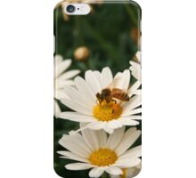 Bee Covered in Pollen on a Daisy iPhone Case/Skin