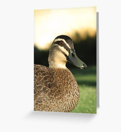 Pacific Black Duck  Greeting Card