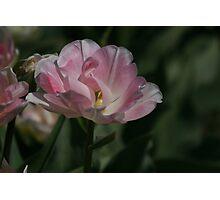 Silky Petals Photographic Print