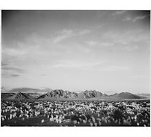 Ansel Adams - Death Valley Photographic Print