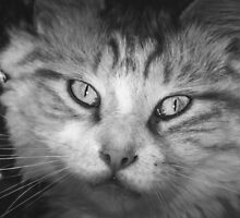 BobCat - Our Second Feral Boy - B&W by MotherNature2