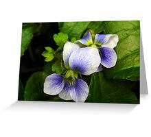 My Pretty  Edible White Violet Wildflower Greeting Card