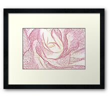 Summer Rose Pencil on White Framed Print