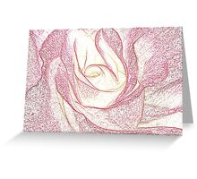 Summer Rose Pencil on White Greeting Card