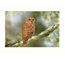 Owl Time Art Print