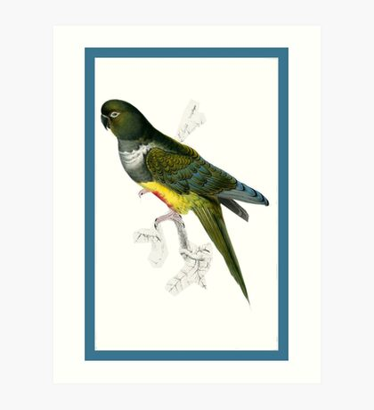 Green and Yellow Parrot Art Print