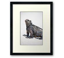 Marine iguana in the Galapagos islands Framed Print