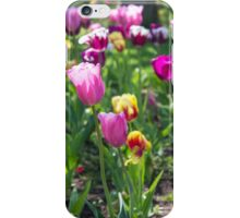 Tulips Park Gardens iPhone Case/Skin