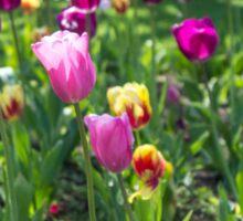 Tulips Park Gardens Sticker
